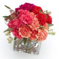 Carnation Delight.jpg
